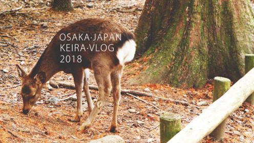 和我去遛弯儿:初遇大阪