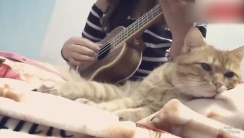 主人在弹吉他,猫咪趴在旁边听着,这就是岁月静好吧!