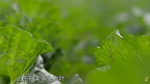 东北人必备的过冬菜,只有东北人才能够理解的一种情怀!