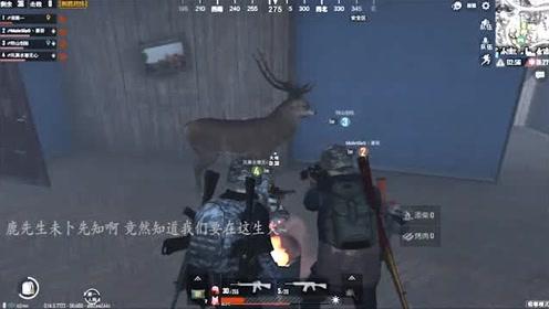 刺激战场:麋鹿也怕寒流,预知我们生火的地方去取暖