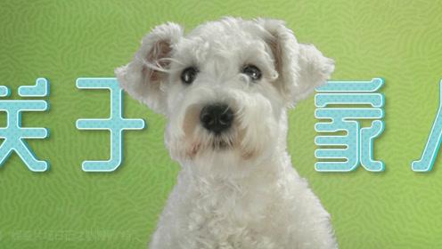 重金聘狼图腾国际顶级驯兽师《狗眼看人心》为训练23只狗演员拼了!
