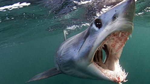 """众人看鲸鱼,不料看到白鲸被巨大""""水怪""""吞食,可怕!"""