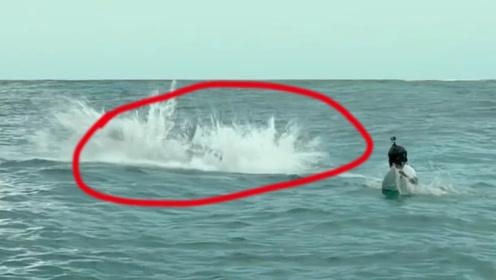 墨西哥出现大鲨鱼,连吃数名游客,当地人却从未发现