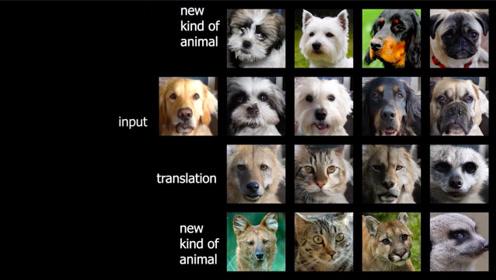 图像转换,狗变猫