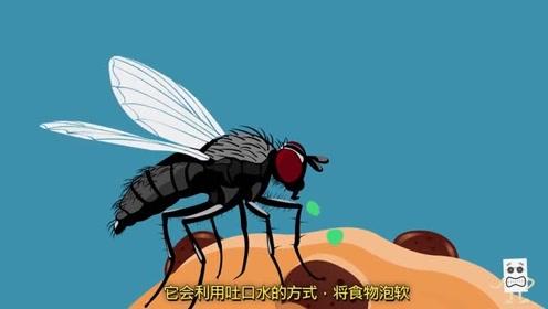 苍蝇落在食物上都干了些啥?又吐口水又产卵!