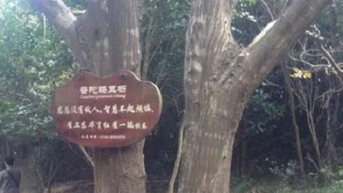 中国最牛一棵树,世界上仅剩一棵,老外千里迢迢过来只为看一眼!