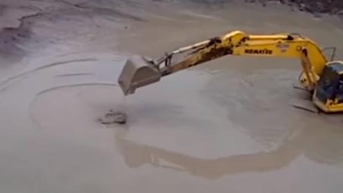 鳄鱼硬核操作,直接挑战挖掘机,下一秒请憋笑!