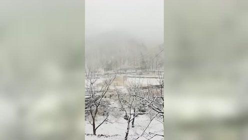 飞雪迎春花枝展俏 春天的雪景也很美啊!