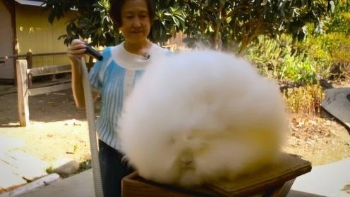 奶奶野外捡到一只兔子,带回家收养,孙女看到却被吓得一身冷汗!
