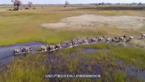 被人类推向灭绝的动物,全球仅剩3只,而我们中国就有2只!