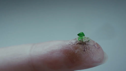 女孩不小心被植物弄破手指,第二天醒来,身体竟开始长出植物