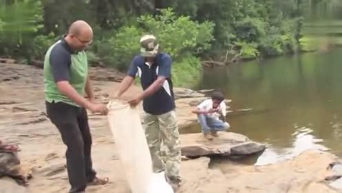 野外放生五米长眼镜王蛇,下水的那一刻,你才知道它有多霸气