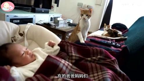 双胞胎在客厅睡觉觉,太暖心了,小猫咪守卫小宝宝