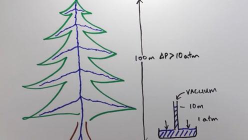 有的树高达100米,如何把水吸到最顶端的枝叶?原来这么神奇!
