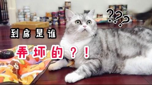 猫咪们第一次玩自动逗猫棒没经验,停了就相互埋怨:就是你弄坏的