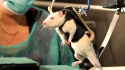 抑郁症对人究竟有多大影响?用一只小白鼠测试,看完陷入沉默!