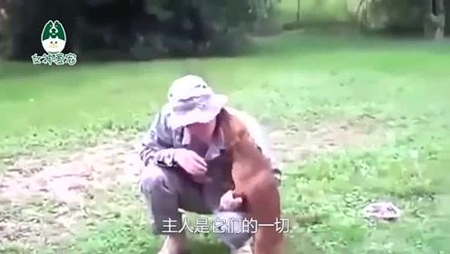 狗狗见到当兵回家的主人,竟抱着主人哭泣