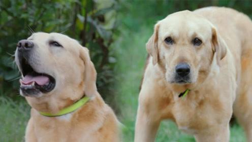 《神犬小七3》揭秘宠物世界 :一波趣味萌宠表情包!