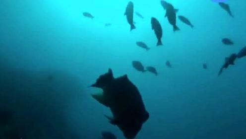 老人用特殊的声音呼喊出水中巨物!