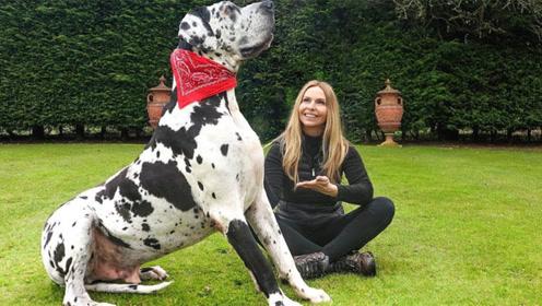 盘点10个最不同寻常的狗狗,你最钟意哪一个?