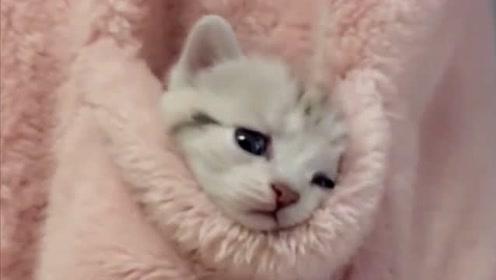 男友送的小奶猫,就喜欢在口袋里,整天卖萌太可爱了!