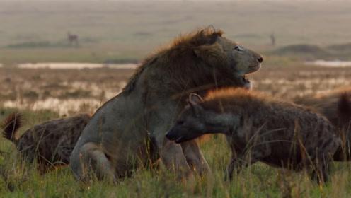 世道有轮回,鬣狗也能被掏肛!感受一下自己的擅长技能