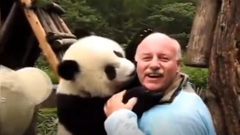 这只大熊猫真调皮,看到外国友人,做了这样的动作!