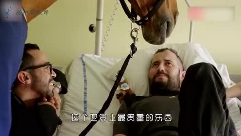 主人生病后,马儿也茶饭不思,最终朋友申请医院,终于看到了主人