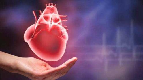 心脏每天不停跳动,它不需要休息吗?科学家:答案恰恰相反