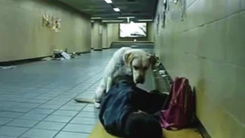 当乞丐遇上流浪狗,在生死关头的时候,看哭上万观众!