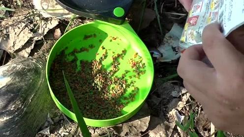 夏季钓鱼鲤鱼鲫鱼饵料配方,野钓鱼获好