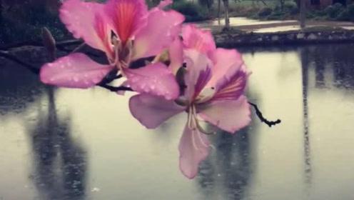 哪些生肖的人,进入九月,桃花运攀升,招来爱情和财富!