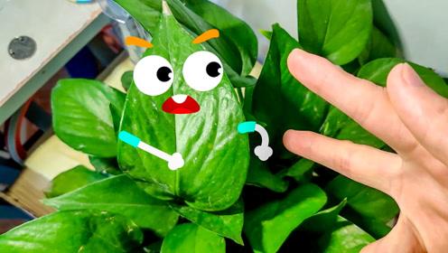 会说话、会搞笑的绿色植物和尺子