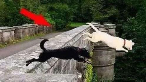"""600只狗在鬼桥跳下自杀,专家赶来查看,桥下竟发现有""""怪物"""""""