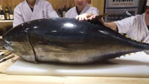 世界上最贵的鱼,各国默认不禁捕,被吃到濒临灭绝