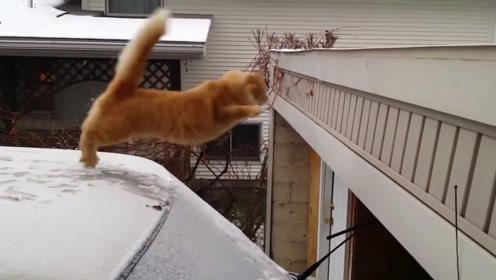 一开始以为这只猫是高手,不料刚刚起跳,搞笑的画面出现了