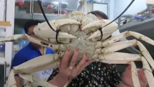 """螃蟹中的""""白金段位"""",一只就卖2000大洋,越南人赞不绝口!"""