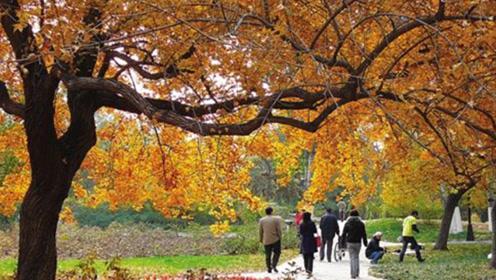 入秋之后常做这2件事,不仅有益身体健康,而且提升运势!
