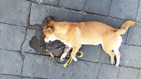 为什么老人说狗狗死后不能埋?还真不是迷信,真实原因出人意料