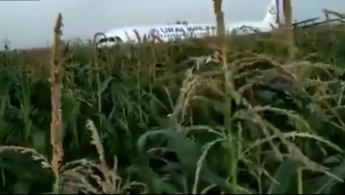俄客机起飞后撞上海鸥成功迫降玉米地  机上234人全部生还