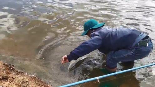 钓竿异常的沉重,伙伴拿抄网来捞结果大草鱼一捞上岸几人高兴大叫