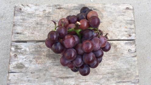 葡萄用清水洗,只会越洗越脏,教你正确清洗方法,洗完连皮都能吃