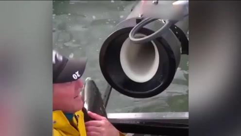 """美国科技公司发明 """"鲑鱼大炮"""" 助其洄游 网友:鱼会自闭吗?"""