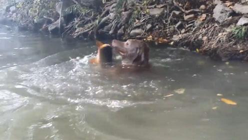 狗狗每天带回大鱼,主人暗中跟踪发现不得了,这狗简直太厉害了