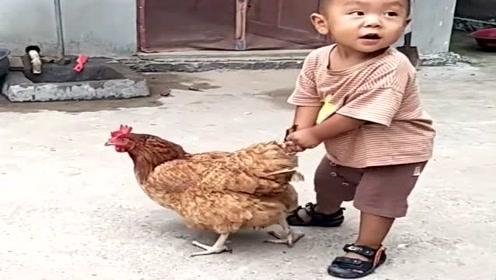 自从去了奶奶家,可怜的母鸡,就成了宝宝的玩具!