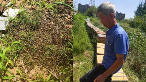 93箱蜜蜂疑遭投毒,仅剩5箱没事,68岁老蜂农:损失5万多