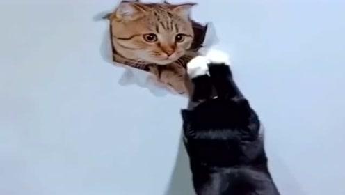 铲屎官在家贴了张猫头,可把猫咪整懵了,看完别笑!