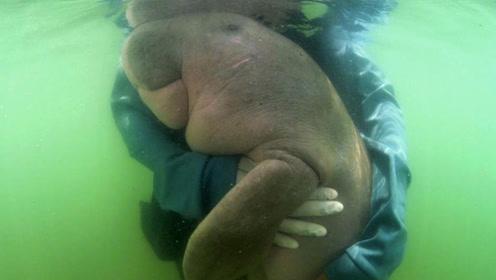 泰国网红海洋动物儒艮因塑料死亡:肠胃里发现大量塑料