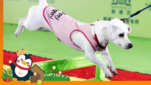 最大上海亚洲宠物展,汪星人喵星人齐聚,爱宠的你不来看看?