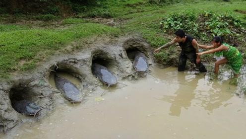 大姐在池塘边挖四个洞,睡个午觉就有大鱼上钩,立刻掏出来烤着吃
